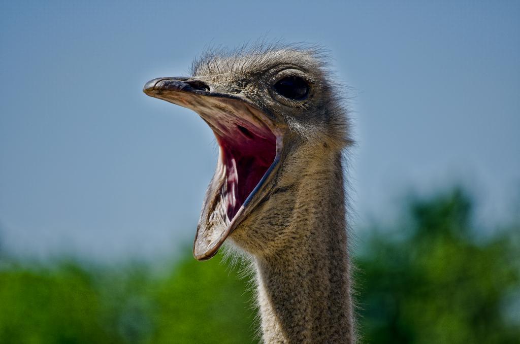 Ostrich Pillow Light O Travesseiro Avestruz Por Que N 227 O